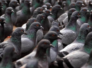 Rete-protezione-piccioni